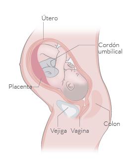 6910735e5 Semanas 41 y 42 de embarazo - inatal - El embarazo semana a semana