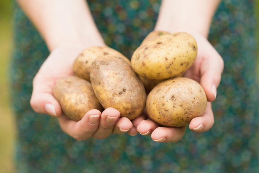 patata-diabetes